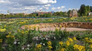 A view of the Pollinator and Bird Garden during construction